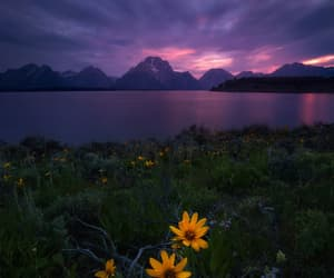 sunflower, flowers, and landscape image