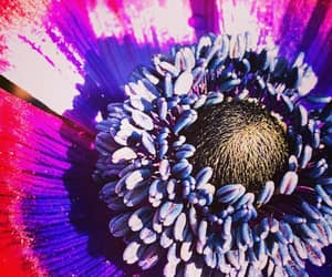 anemone and flowers image