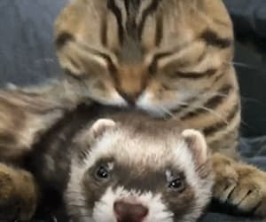 ferret and gif image