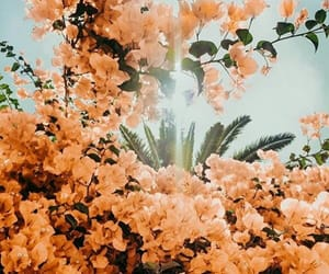 flowers, nature, and inspiration image