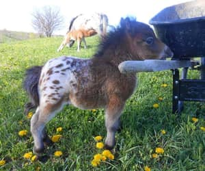 cute, horse, and animal image