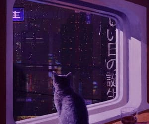 cat, purple, and aesthetic image