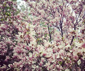 flowers, garden, and magnolia image