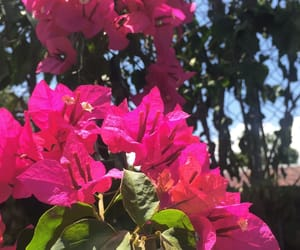 Caribbean, pink, and summer image