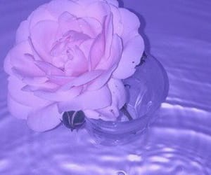 pink, rose, and water image