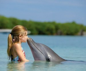 dolphin, kiss, and sea image