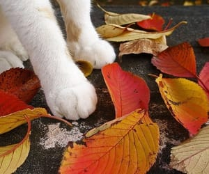 autumn, cat, and leaves image