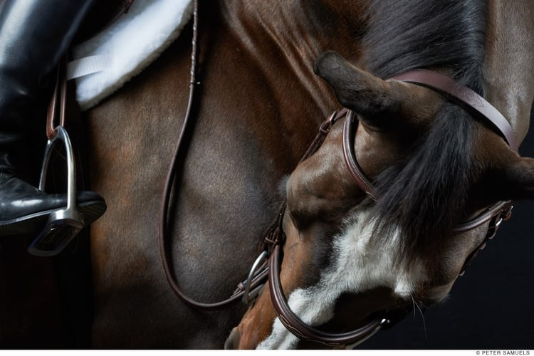 article, cheval, and equitation image