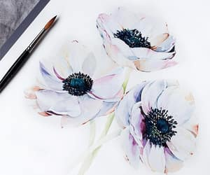 watercolour, anemone, and flowers image