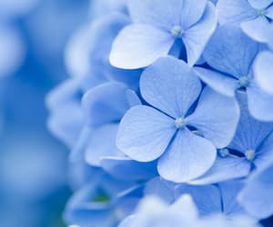 beautiful, blue, and blue flower image