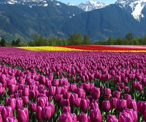 article, kashmir tourism, and kashmir tour packages image