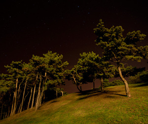 green, night, and three image