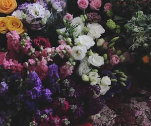 bush, daisy, and flowers image