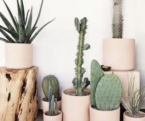 cozy, idea, and room image