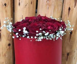 flowers, ًورود, and ًورد image
