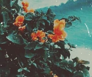 beach, blue, and flowers image