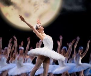 ballet, dance, and swan lake image