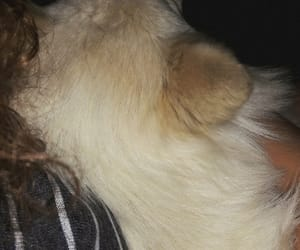 animal, paw, and white image