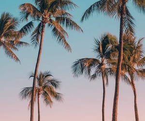 beach, palm trees, and photography image
