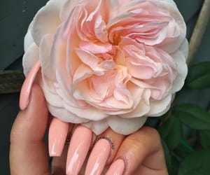 nail inspo, girly inspo, and nail goals image