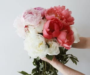 bouquet, nature, and peonies image