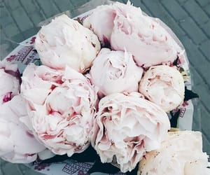 bouquet, pale pink, and peony image