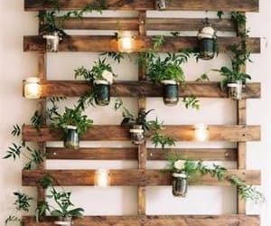 plants, decoration, and decor image