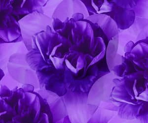 floral, purple, and violet image