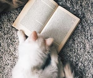 books, cat, and kitty image