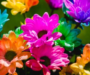 colorful and floral image