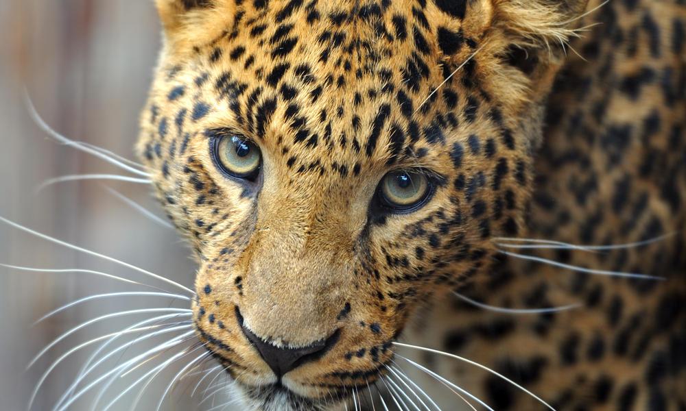 animals, elephant, and leopard image