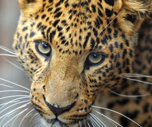 animals, endangered, and forest image
