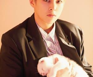 animal, cat, and exo image