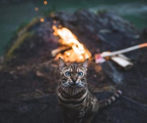 cat, eyes, and fire image