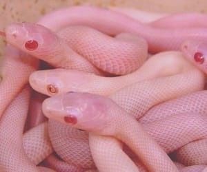 snake and pink image