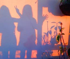 shadow, orange, and plants image