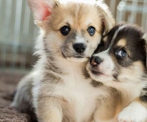 dog, puppy, and lovely image
