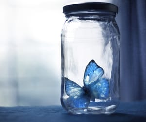photography and blue butterfly image