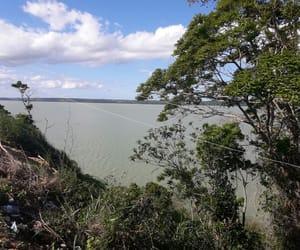 arvores, verde, and paisagem image