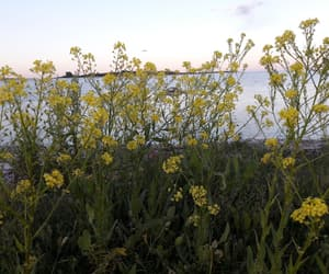 flower, sea, and gotland image