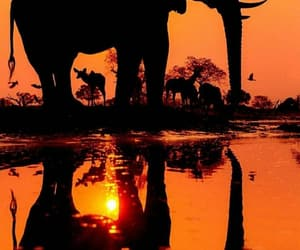 Animales, selva, and atardecer image