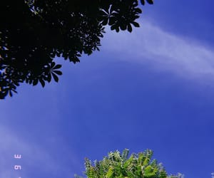 sky, trees, and spring image