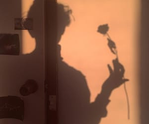 shadow, aesthetic, and rose image