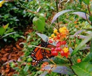 buterfly, flowers, and day image