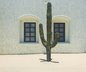 cactus, mexico, and plant image