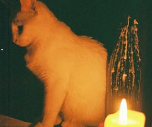 aesthetics, candle, and cat image