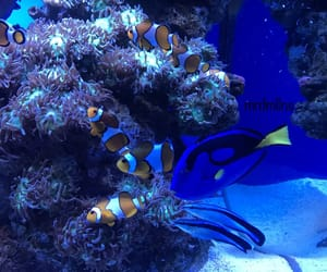 blue, nemo, and water image