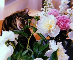 cat, home, and peony image