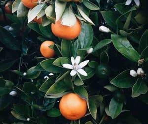 orange, nature, and flowers image
