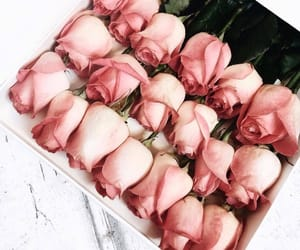 beautiful, roses, and beauty image